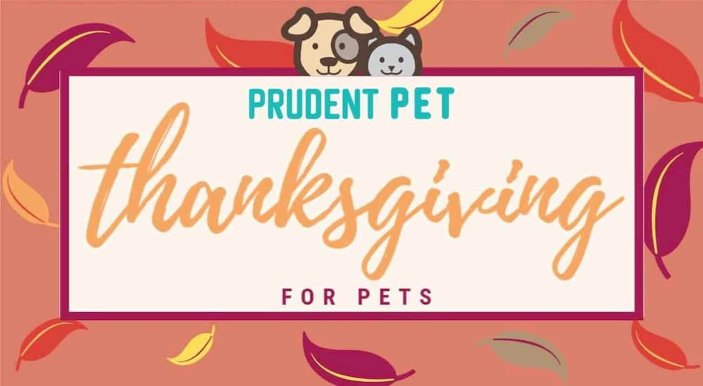 Thanksgiving for Pets banner from Prudent Pet